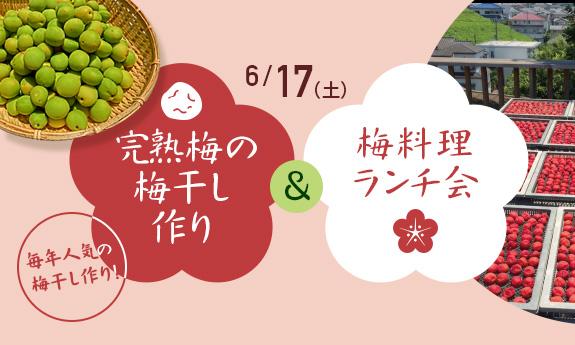 杉田梅の木坂ハウスで楽しむ 完熟梅の梅干し作り&梅料理ランチ会