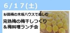 【受付中】杉田梅の木坂ハウスで楽しむ 完熟梅の梅干し作り&梅料理ランチ会