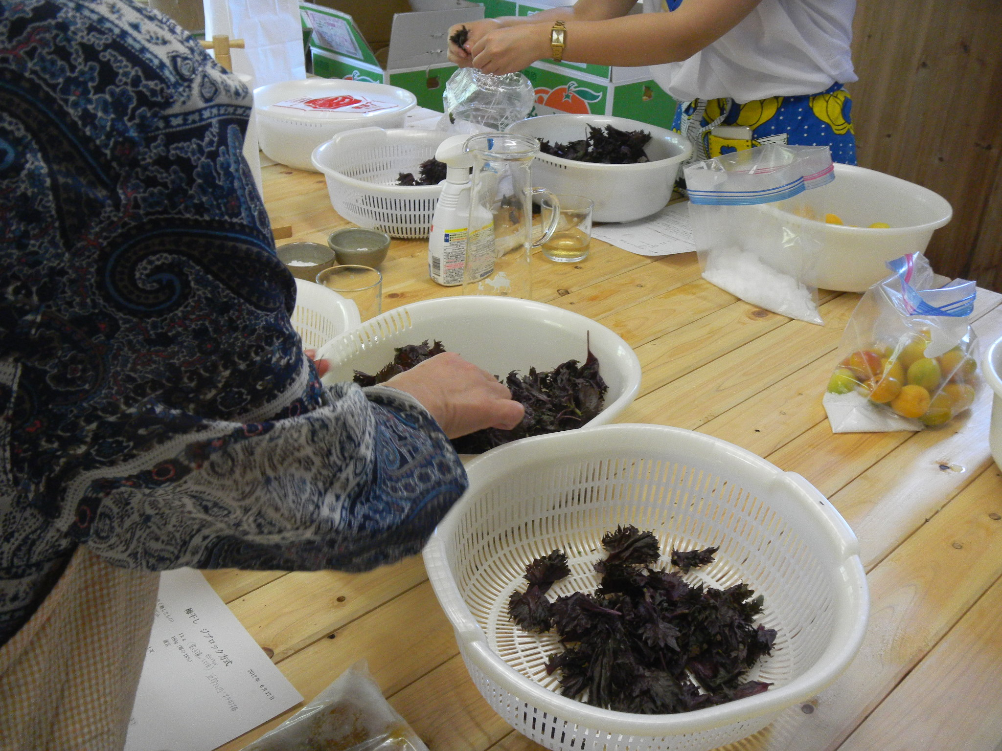 【開催レポート】杉田梅の木坂ハウスで楽しむ 完熟梅の梅干し作り&梅料理ランチ会