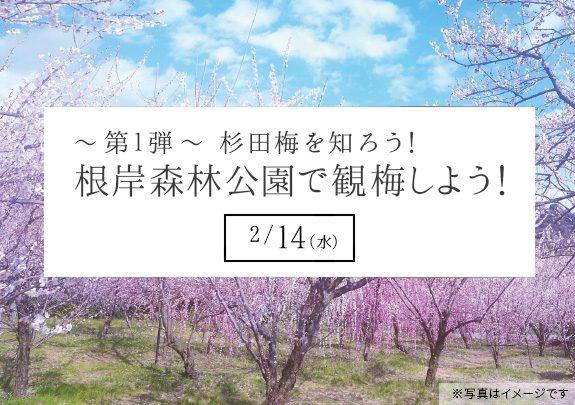 杉田梅を知ろう① 根岸森林公園で観梅しよう!