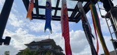 【季節飾り】こいのぼり展示&ワークショップ開催中!